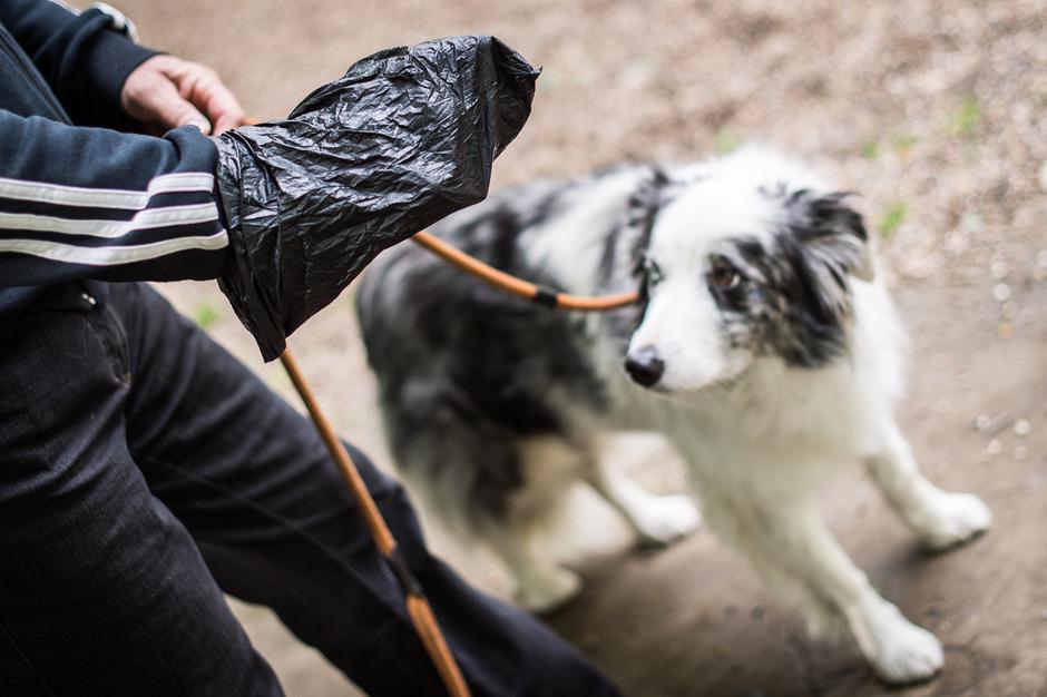 Liegen gelassener Hundekot ist ärgerlich – und kann für Mensch und Tier gefährlich sein.