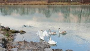 Zwei von ihnen kurieren ihre Beinverletzungen bis zum Frühjahr in einer Wildvogel-Station am Achensee.