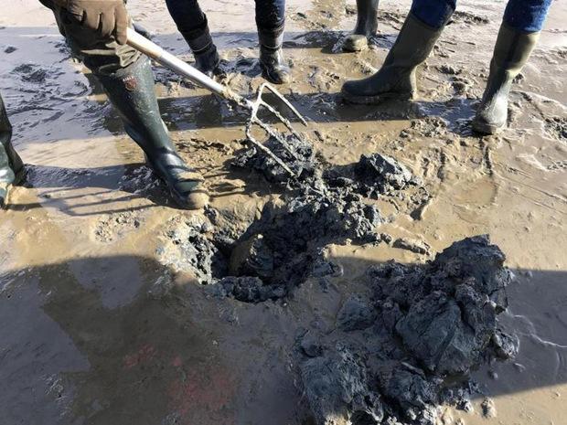 Wattführer Franzen sucht und gräbt nach einem Wattwurm. Viele Tiere sind im Winter aber nicht zu sehen.