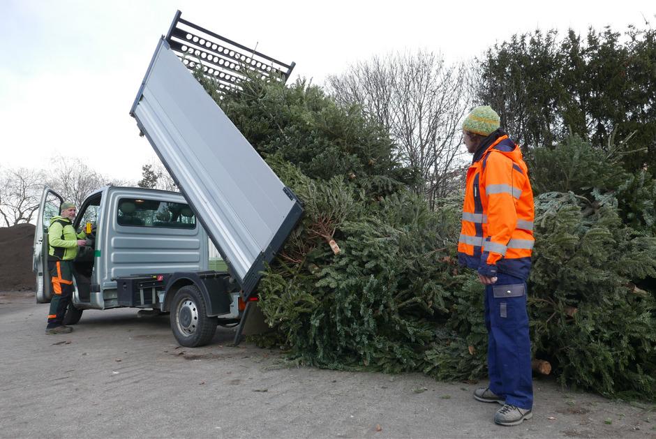 Josef Oberlojer und Christian Scherer (v.l.) sammeln die Bäume bei den über sechzig Wertstoffinseln in der Stadt ein und bringen sie in die Kompostieranlage.