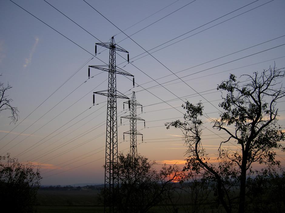 Viele Bäume werden in Biomassekraftwerken zu Strom und Fernwärme. Die in Deutschland alljährlich in Berlin eingesammelten 350.000 Christbäume liefern Wärme und Strom, mit denen rund 500 Haushalte ein ganzes Jahr lang versorgt werden können.