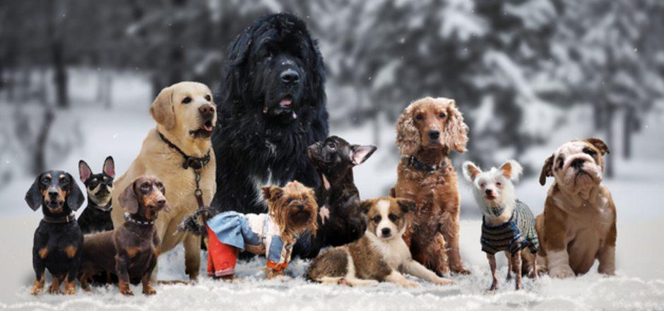 """Damit sich die Vierbeiner austoben können, gibt es in vielen Ballungszentren eigene """"Hundespielwiesen"""". Auch in Reutte wird der Wunsch nach solch einer Freilauffläche laut."""