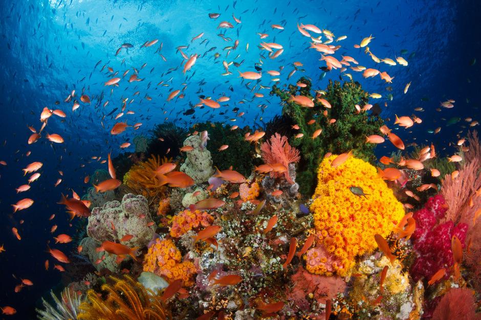 Ein intaktes Riff ist die Kinderstube der Fische.