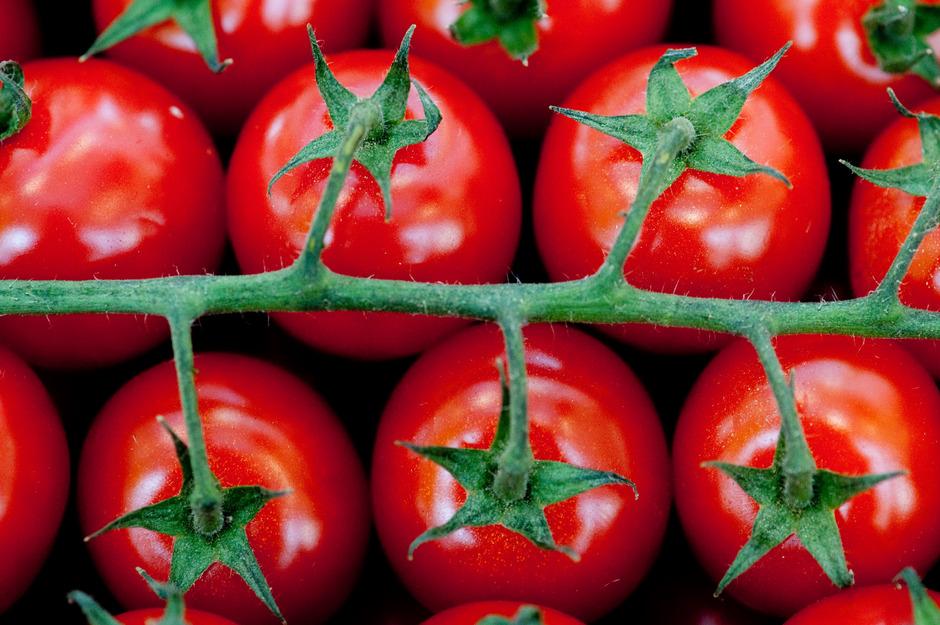 """Grüne Stellen der Tomate sind wirklich giftig. Sie enthalten Solanin. """"Dieses Gift dient der Pflanze zur Abwehr von Schädlingen"""", erklärt der deutsche Ernährungsexperte Harald Seitz. Bei Menschen können Vergiftungserscheinungen auftreten."""
