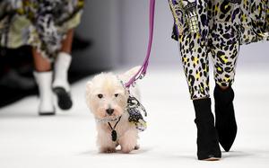 Im Leoprint macht das Model neben dem West Highland White Terrier eine gute Figur.
