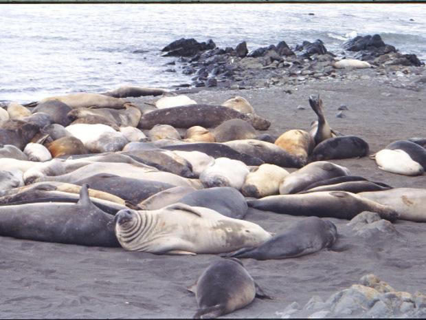 Robben lassen sich durch die Besucher nicht aus der Ruhe bringen.