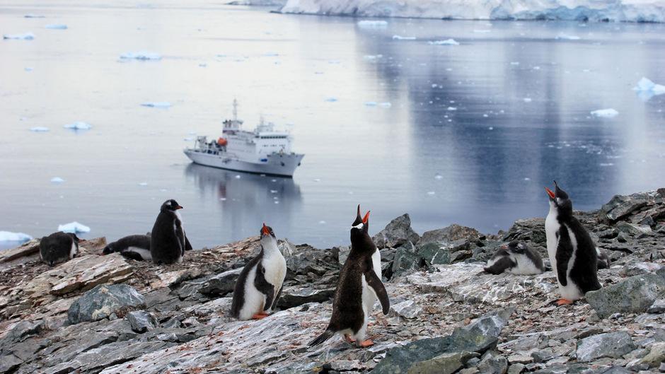 Die Pinguine heißen das Kreuzfahrtschiff willkommen.