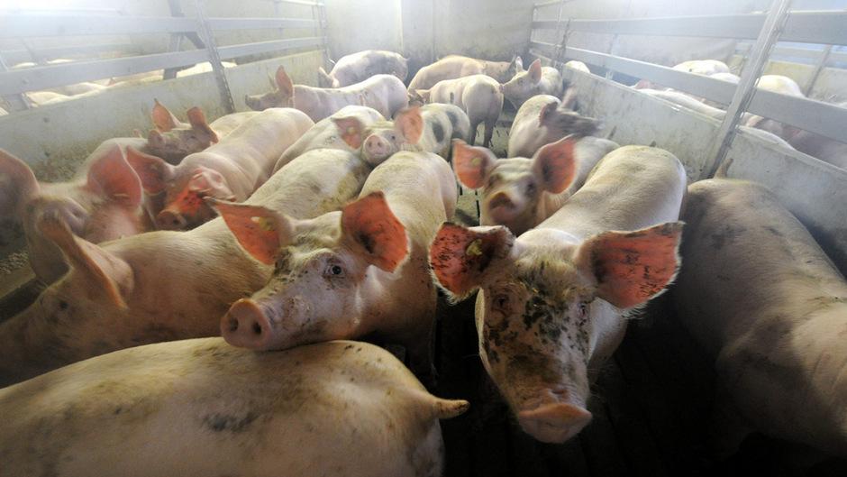 Umweltschützer sehen durch Fleischrabatte Tierwohl, Umwelt und Klima gefährdet.