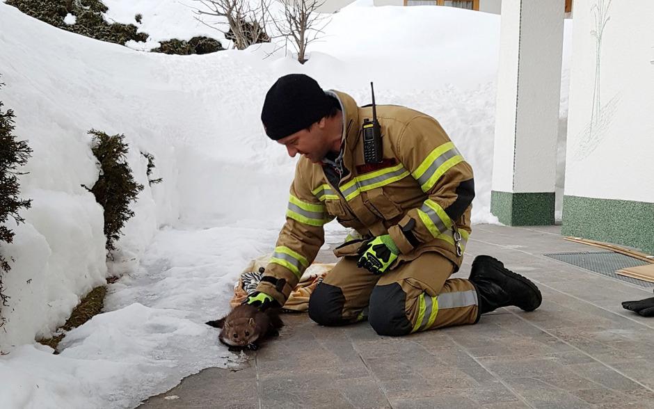 Ein festgefrorener Marder sorgte am Dienstag für einen Feuerwehreinsatz in Eben am Achensee.