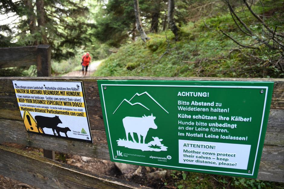 Im Pinnistal war schon 2014 vor dem Zusammentreffen von Hunden und Mutterkühen gewarnt worden. Ein Zaun wäre jedoch nötig gewesen.