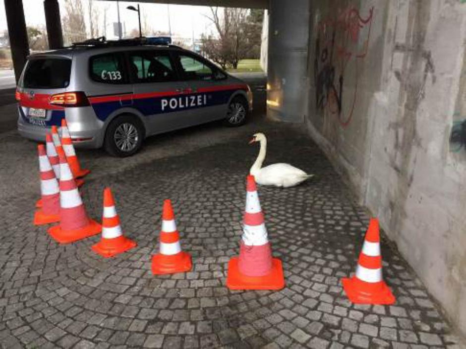 Die Polizei kesselte das Tier mit Leuchtkegeln ein.