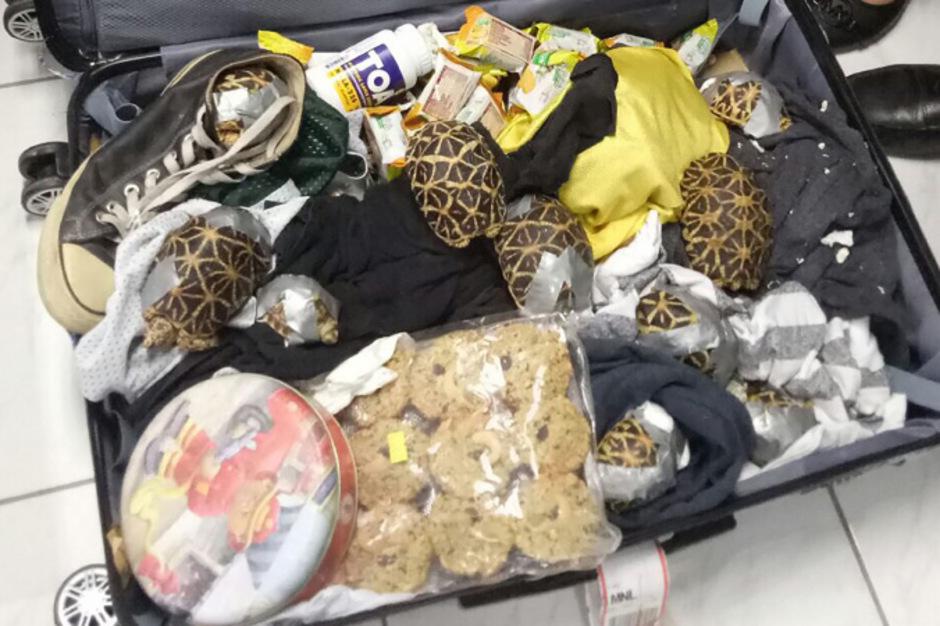Stern-, Köhler- und Spornschildkröten sowie Rotwangen-Schmuckschildkröten befanden sich in den Koffern.