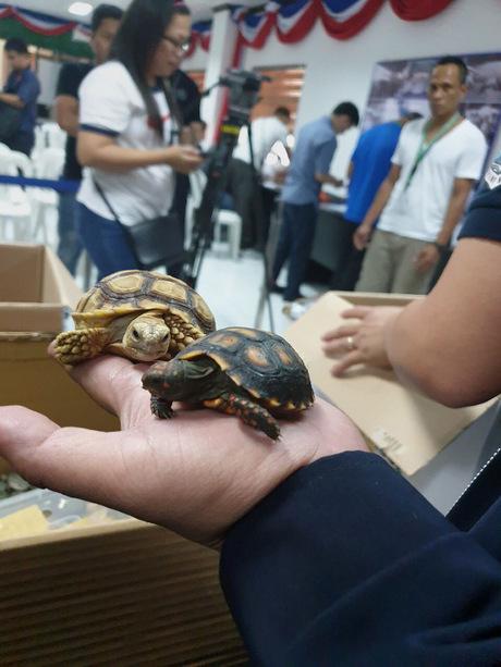 Nach dem Passagier, der die Schildkröten schmuggeln wollte, wird gefahndet.