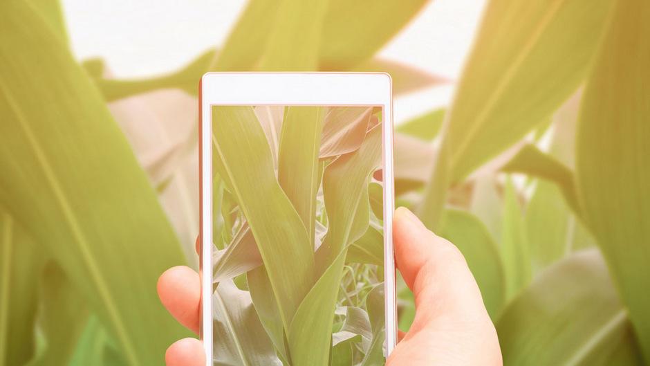 Was ist das für eine Pflanze? Mit einem Smartphone ausgestattet können Laien ihr Wissen mit Forschern teilen.