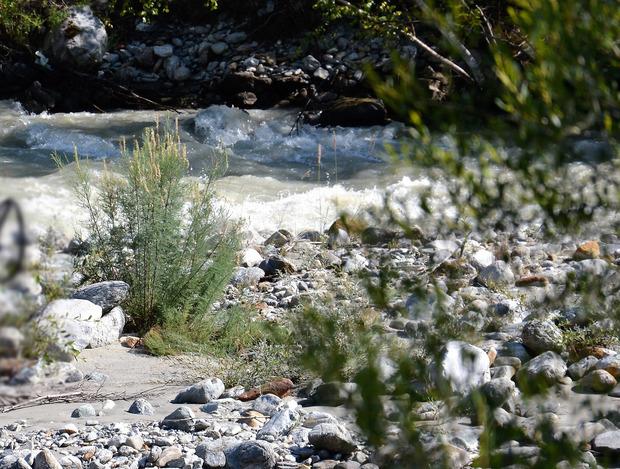 Tamarisken kann man nicht einfach umpflanzen, meint der WWF.