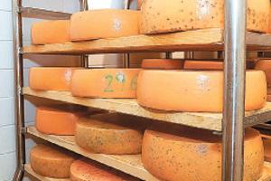 Nach Wochen in der Reifekammer kommt der Käse zurück zum Bauern.