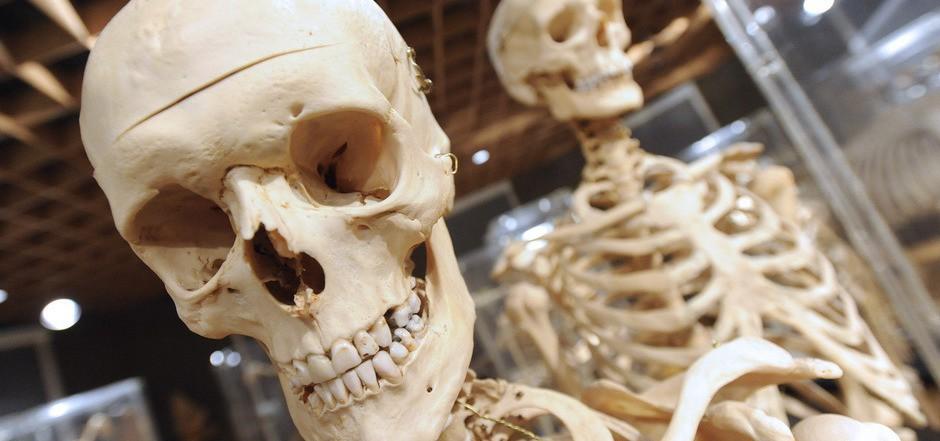 Das Institut für Anatomie hatte Anspruch auf die Leichen Hingerichteter für Studienzwecke.