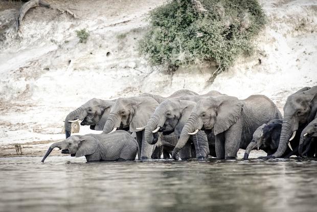 Botswana ist für die Elefantenpopulation berühmt.