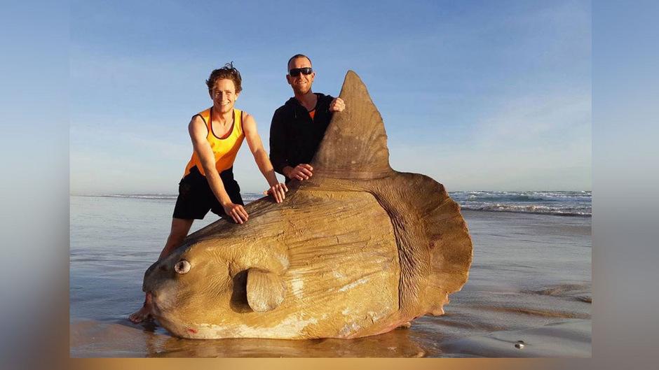 Hunter und Steven Jones mit einem Mondfisch, den sie am Wochenende in der Nähe der Mündung des Murray Rivers im Südosten Australiens gefunden haben. Eigentlich wollten sie angeln gehen.
