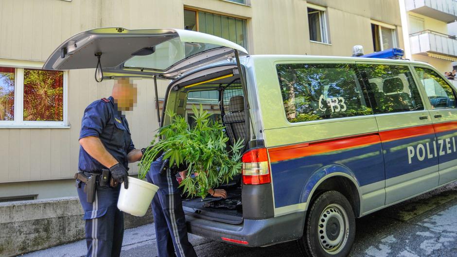 Polizeibeamte mit einer sichergestellten Hanfpflanze. Der Eigenanbau boomt auch in Tirol.