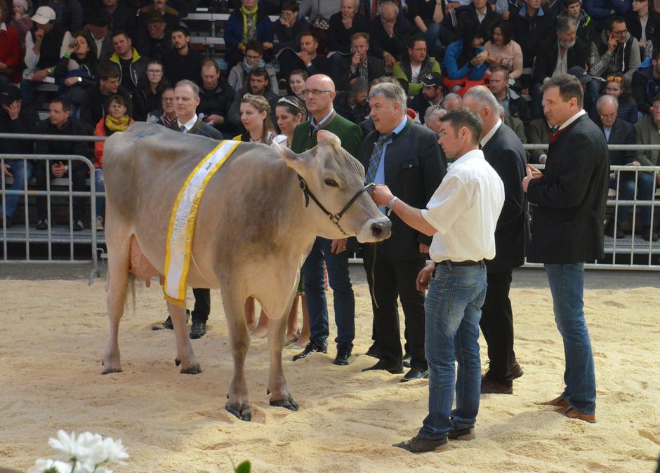 """""""Golden Girl"""" Laura vom Biohof Otto Stecher aus Oetz stellte sich in der Königsklasse der Jury."""
