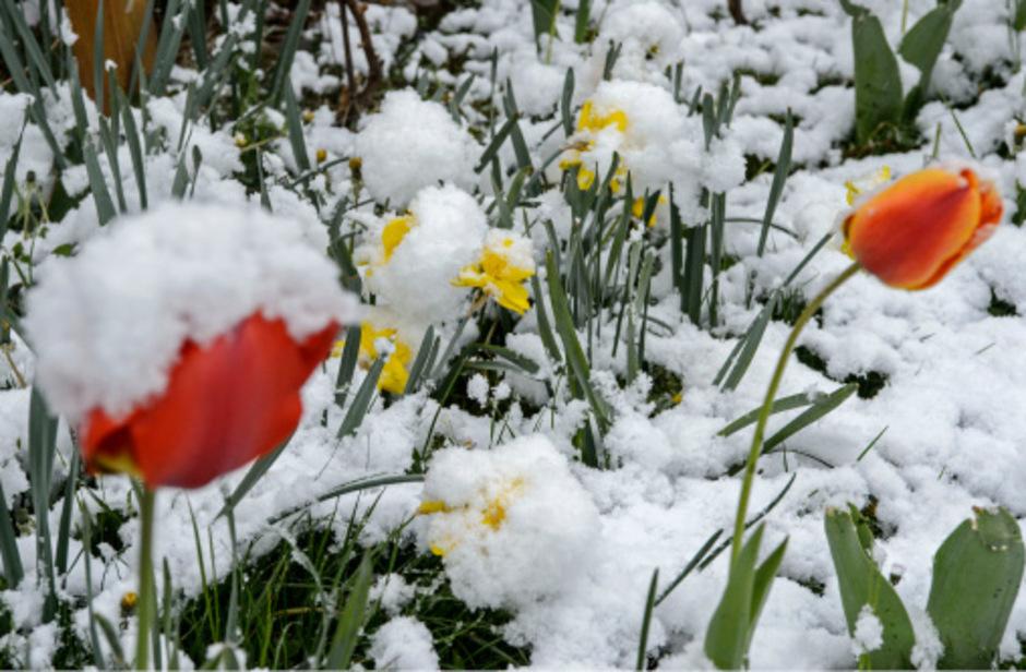 Der April macht bekanntlich was er will. Eine Kaltfront bringt diese Woche noch einmal winterliches Wetter.