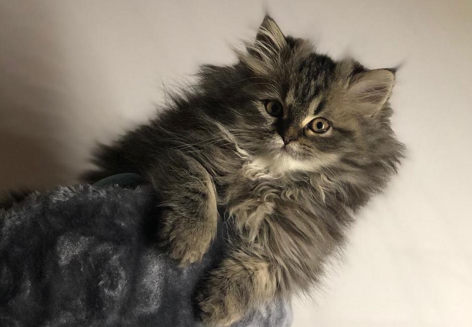 Dass Hauskatzen (Felis silvestris catus) wissen, wie sie heißen, ist jetzt auch wissenschaftlich bewiesen.