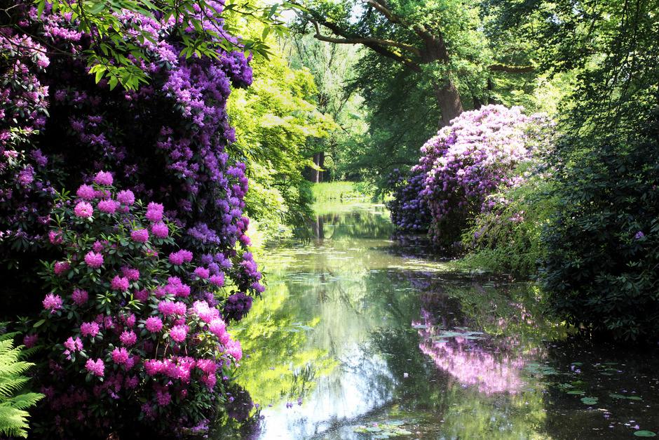 100 Jahre alte Rhododendren spiegeln sich im Wasser auf dem Landsitz De Wiersse.