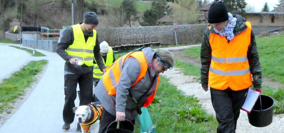 40 freiwillige Helfer beteiligten sich am Amphibienprojekt und brachten insgesamt 3000 Kröten aus den Kübeln sicher zu ihrem Laichplatz am See.