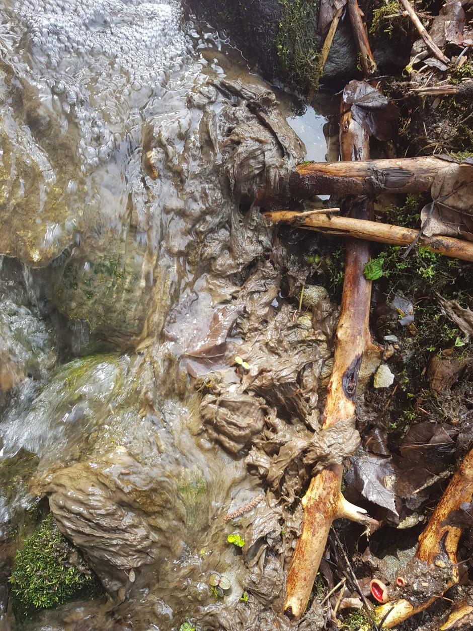 Schleimbildung in einem Seitenbach des Alpbachs: Es handelt sich nicht um Fäkalien, sondern vermutlich um Abwasser aus einer Küche.