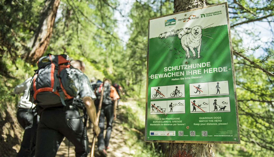 Herdenschutzhunde bewachen und verteidigen Schafe und Ziegen auf der Alm – gegen den Wolf, allerdings auch gegen Wanderer.