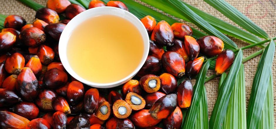 Palmöl ist in Lebensmitteln, Kosmetikprodukten und auch Biotreibstoff enthalten. (Symbolfoto)