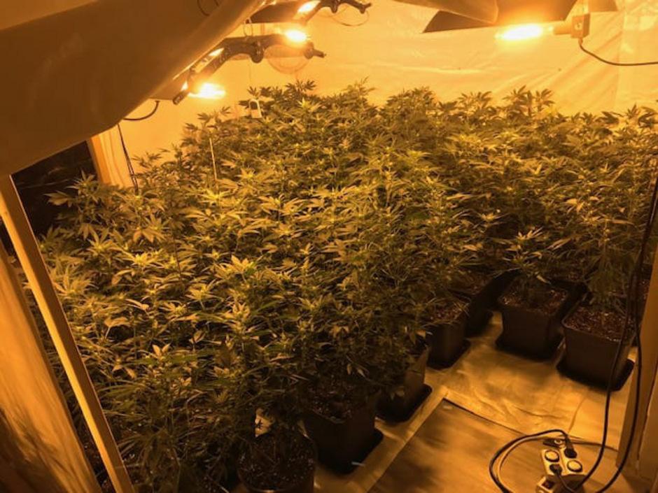 Die Beamten entdeckten eine Aufzuchtanlage mit 73 Cannabis-Pflanzen.