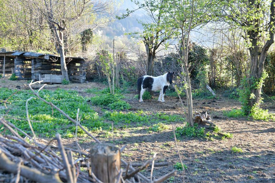 Wo zuvor auch Federvieh untergebracht war, ist am Dienstagmorgen nur ein Pony zu sehen.