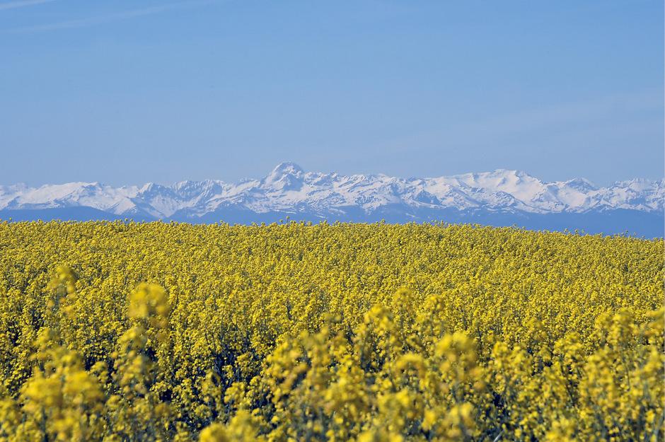 Blick auf die schneebedeckten Gipfel der Pyrenäen. Auch in dieser abgelegenen Region wurden Plastikpartikel-Ablagerungen festgestellt.