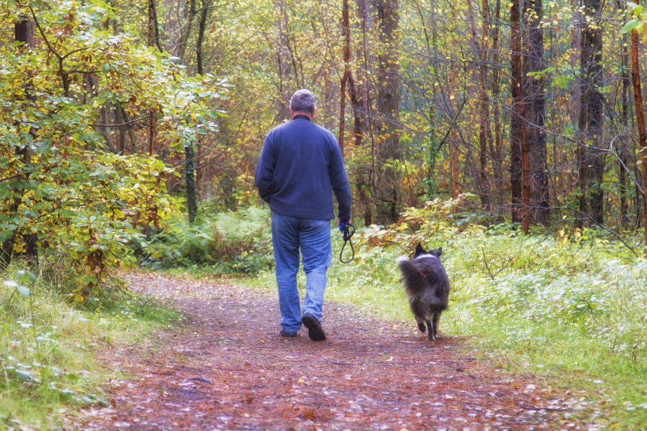 Auch in Freilaufzonen müssen die Hundehalter darauf achten, dass ihr Tier nicht zur Gefahr für andere wird, und müssen es unter Umständen sogar an die Leine nehmen.
