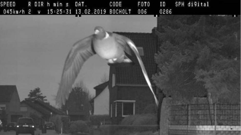 Die Taube wurde mit 15 km/h geblitzt.