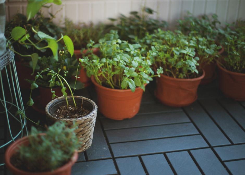 """""""Pflanzen am Balkon sind kein ökologisches Projekt, sondern ein Erlebnis. Man kann dort alles ausprobieren"""", sagt  Bio-Gärtner Karl Ploberger."""