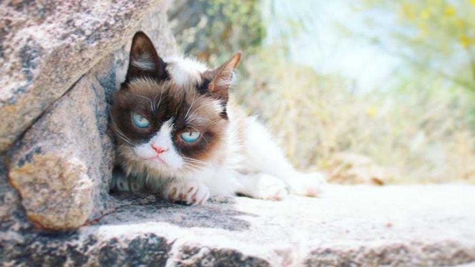 """Wie über den offiziellen Twitter-Account nun bekanntgegeben wurde, ist """"Grumpy Cat"""" am 14. Mai verstorben."""
