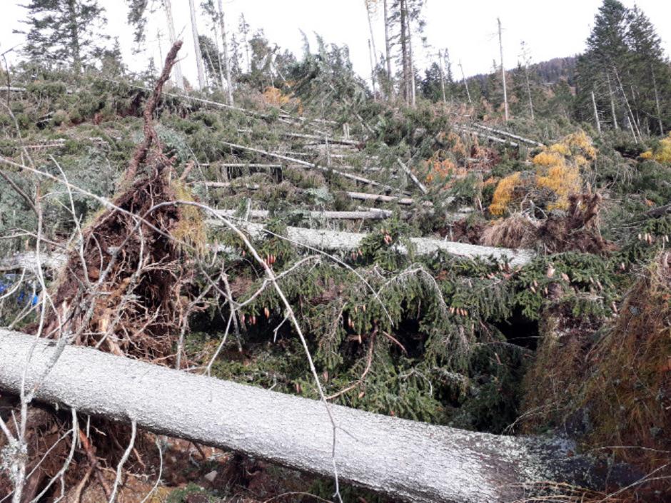 So sah der Wald bei Dölsach nach einem Sturm im Herbst aus.