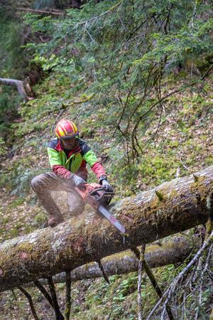 Mit der Motorsäge schneidet er Äste von einem umgestürzten Baum.