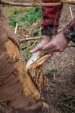 Millinger zeigt eine abgeschürfte Rinde. Der Schaden ist beim Aufräumen entstanden.