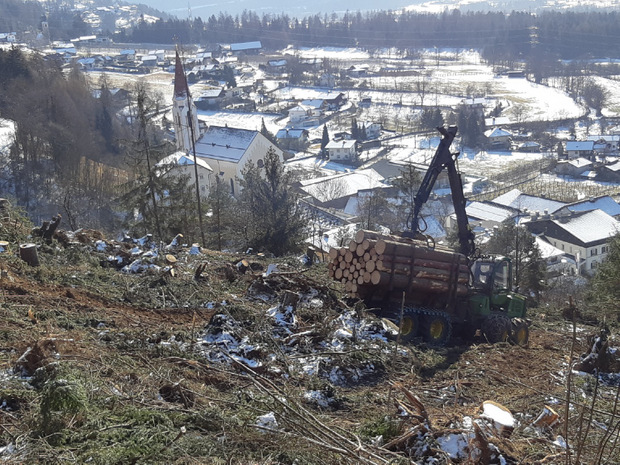 Bisher wurde in Dölsach die Hälfte des Schadholzes entfernt.