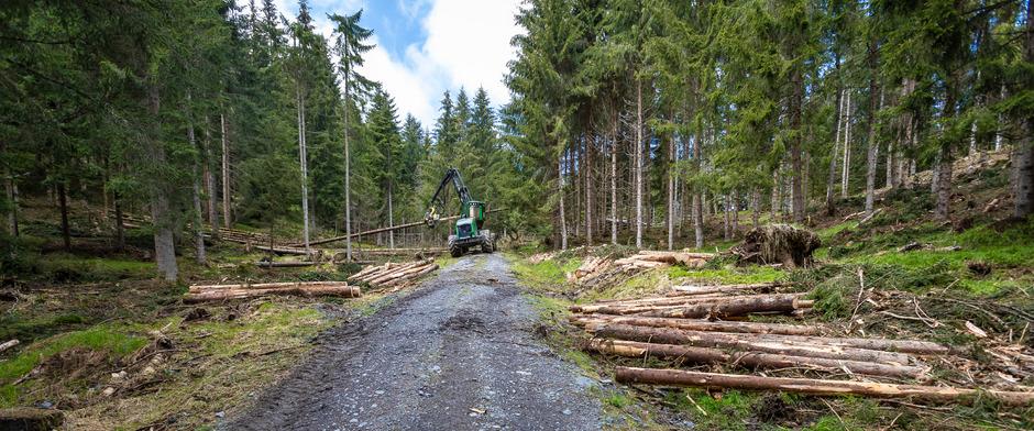 Der Wald leidet: Der Windwurf war 2018 massiv, dazu kommen teilweise massive Schäden durch Wildverbiss.