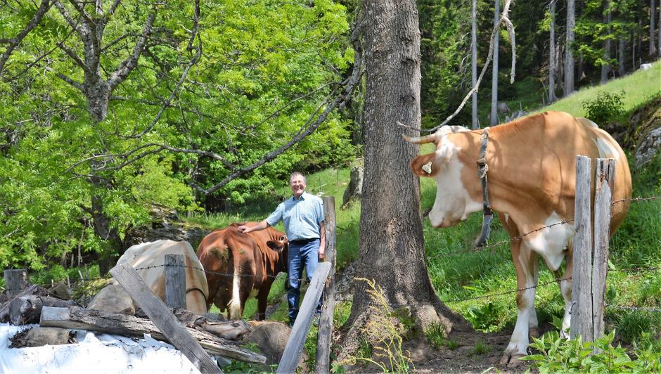 Alfons Huber, Bauer vom Oberplonig-Hof in Nikolsdorf, hält seine Kühe in Kombinationshaltung: im Stall, auf der Weide, auf der Alm.