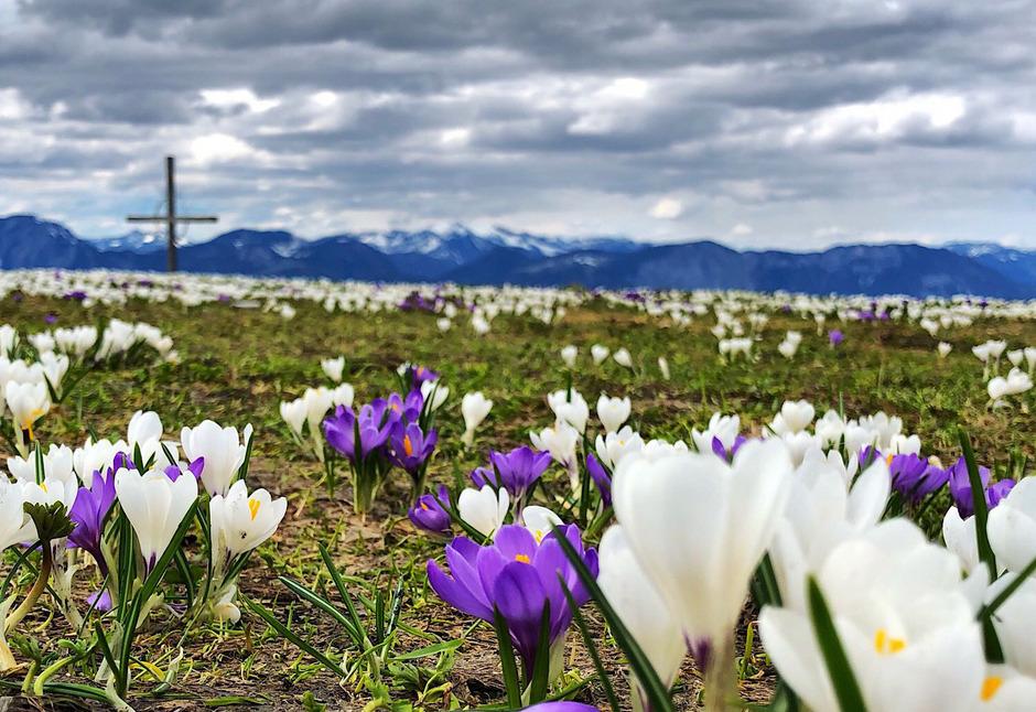 Wolken lassen sich in den kommenden Tagen in Tirol immer wieder blicken.