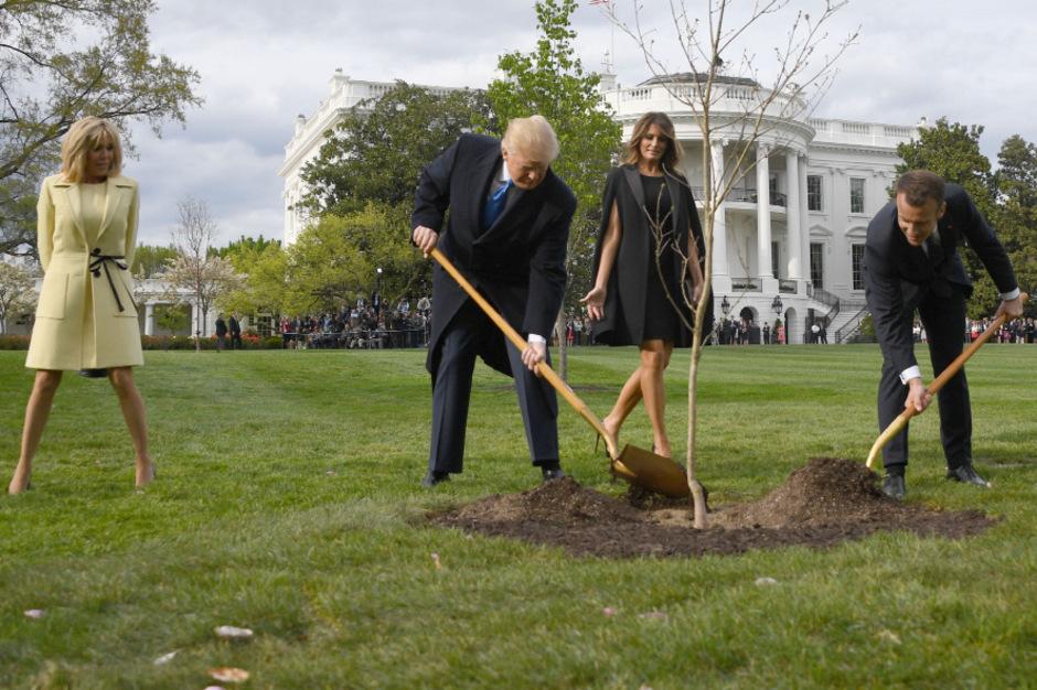 Medienwirksam hatten die Politiker die Eiche eingegraben. Doch der Baum lebte nicht lange.