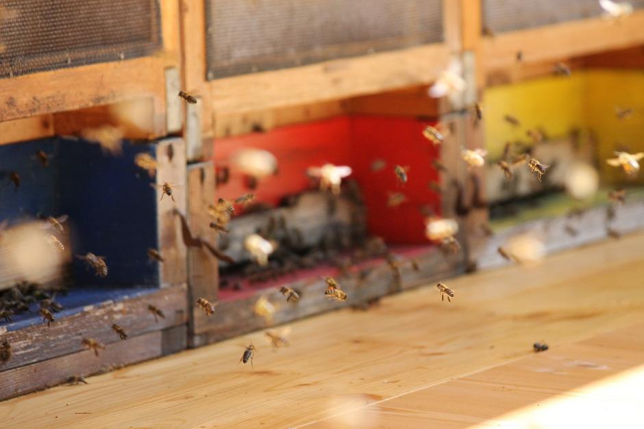 Insgesamt 25 Bienenvölker können hier untergebracht werden.