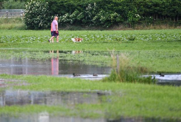 Die Wiesen in Zirl lockten gestern schon wieder Spaziergänger samt Hund an.