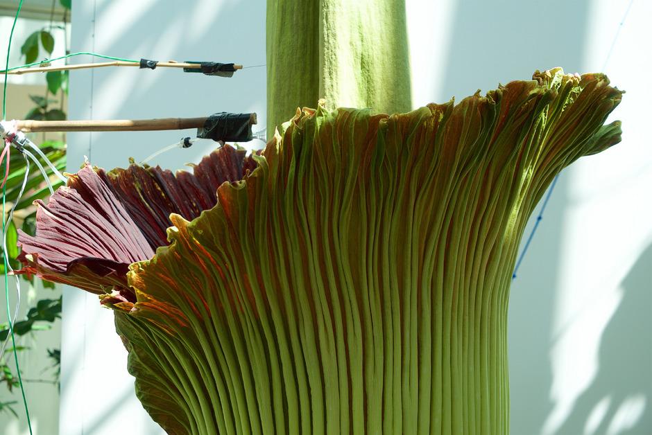 Größte Pflanze Der Welt